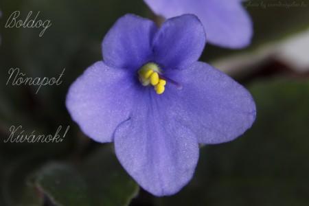 Nőnapi virág - szendreigabor.hu