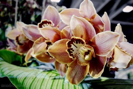 15. Nemzetközi Orchidea kiállítás - szendreigabor.hu