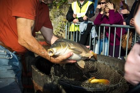 Öreg-tavi Nagy Halászat 2012 - fotó: Szendrei Gábor