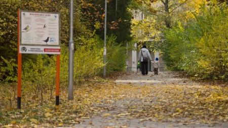 Faültetés az Erzsébet-ligetben Bp XVI. kerület - fotó: Szendrei Gábor