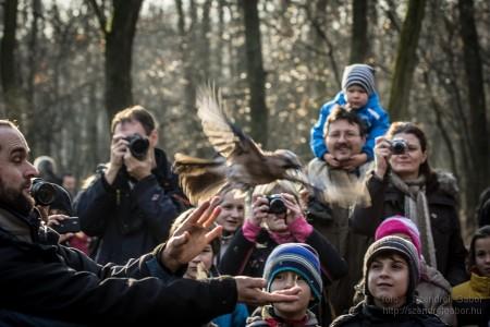 Karácsonyi madarásznap a Farkaserdőben Szajkó : Fotó: Szendrei Gábor