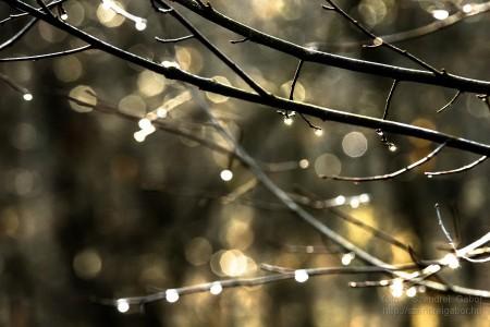 Karácsonyi madarásznap a Farkaserdőben Vízcseppek : Fotó: Szendrei Gábor