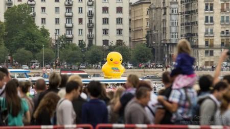 Az első Kacsafutam Budapesten 2014 - fotó: Szendrei Gábor