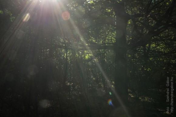 Zebegény - Nagymaros gyalogtúra - fotó: Szendrei Gábor