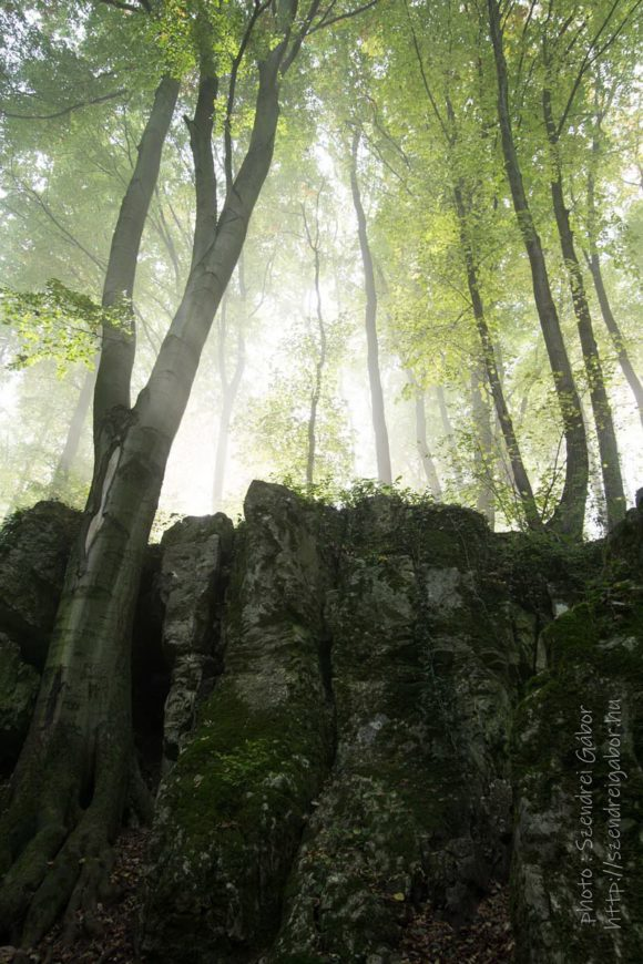 2020. Tatabánya 20km - fotó: Szendrei Gábor